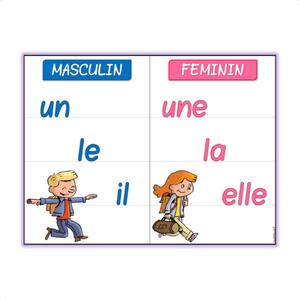 le genre masculin féminin
