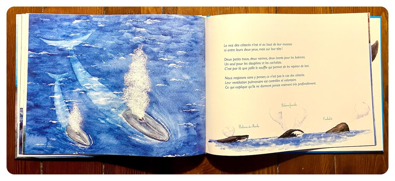 Splash la baleine hop le dauphin