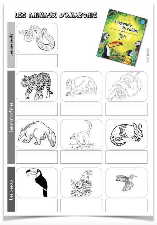 Lexique animaux amazonie